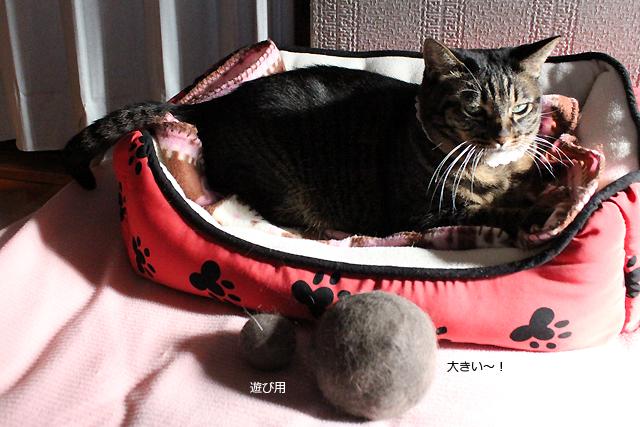 猫の毛玉ボール