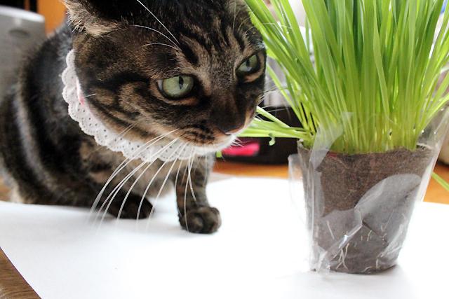 草が横向きの方が食べやすい