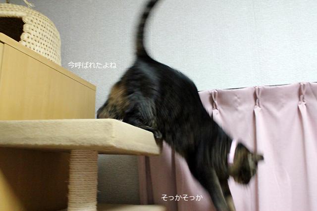 降りま~す