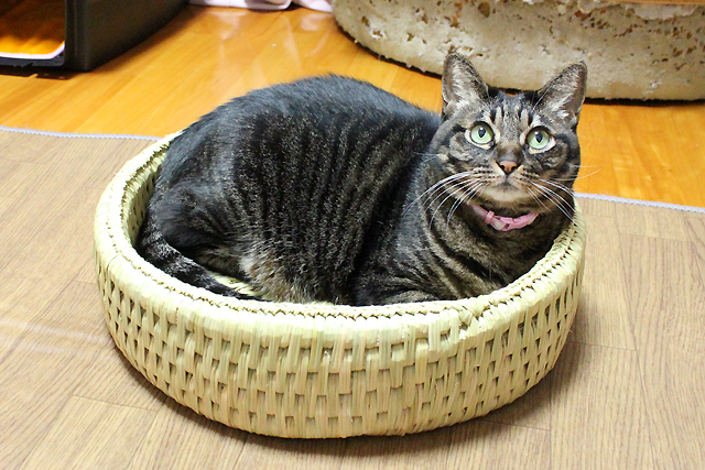 猫つぐら丸型なごみベッド2