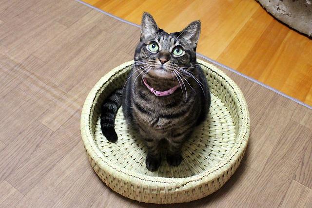 猫つぐら丸型なごみベッド3