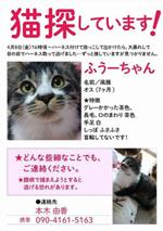 猫を探していますポスター