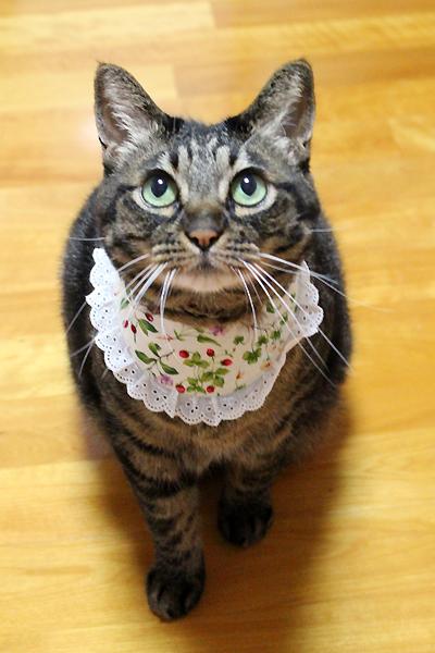 可愛い猫ちゃあさん(*^^*ゞ