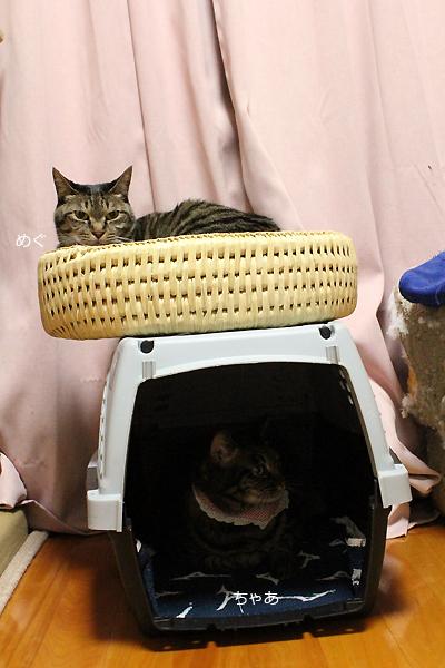猫つぐら丸型なごみベッドとキャリーバッグ