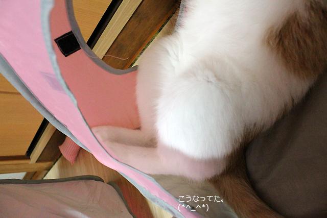 なんか可愛い足の曲がり方~(*^_^*)