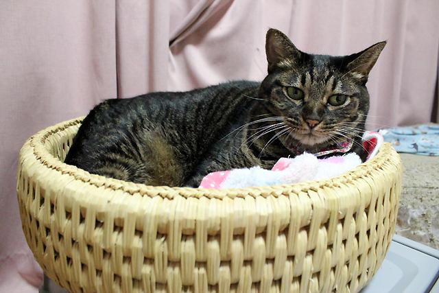 猫堂叔父時鳴る猫つぐら丸型なごみベッド
