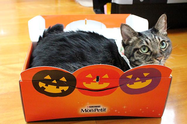 ハロウィン箱猫
