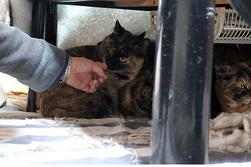 30匹多頭飼育現場の猫たち
