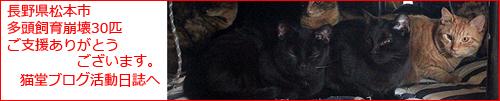 多頭飼育現場の猫たち里親募集