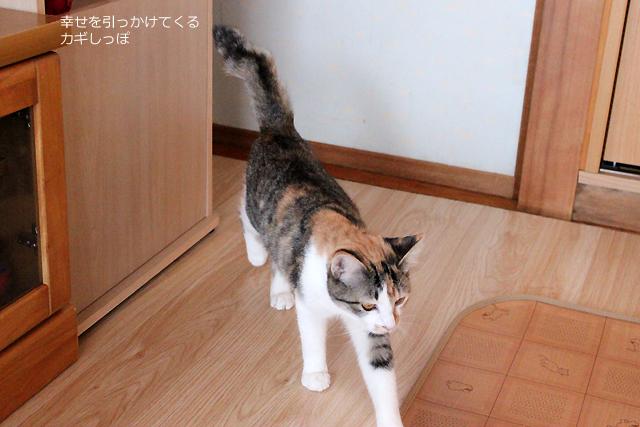 カギしっぽ猫