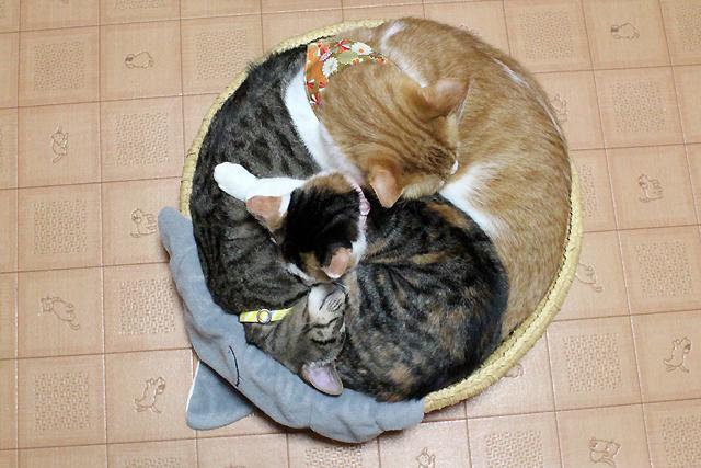 3ニャン猫団子