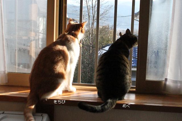朝の外観察、おめぐさんとをちび