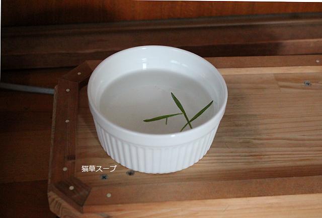 猫草スープ