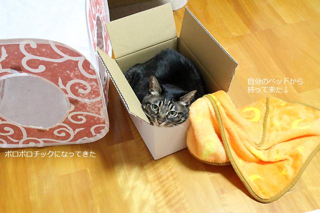 箱猫ちゃあさん