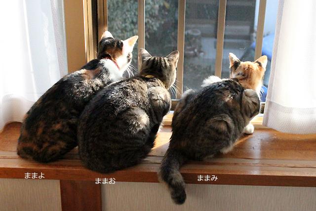 3ニャン外観察♪