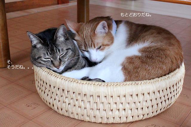 猫つぐら丸型なかよしベッド