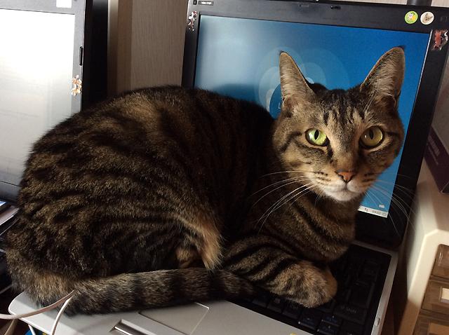 パソコン暖かい