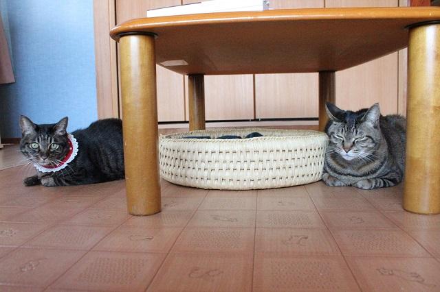 おめぐさんと猫つぐら丸形仲良しベッドを挟んで