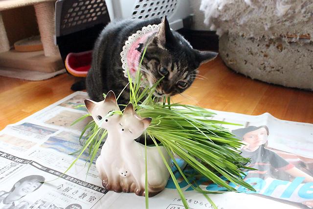猫草長すぎ