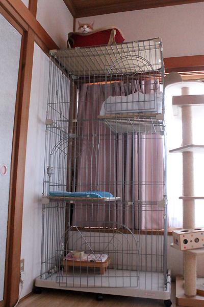3段ケージ屋上