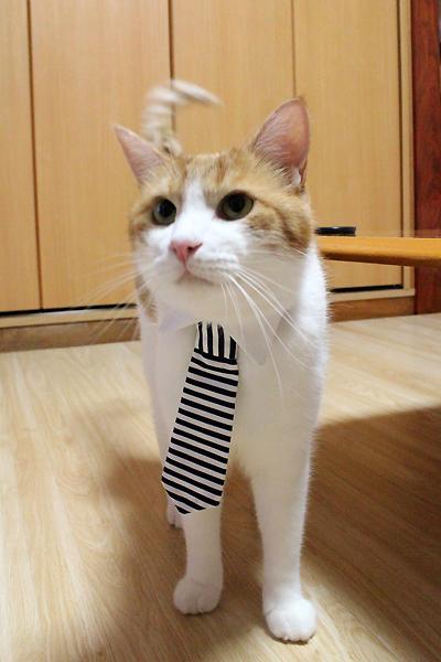 猫のおしゃれネクタイ