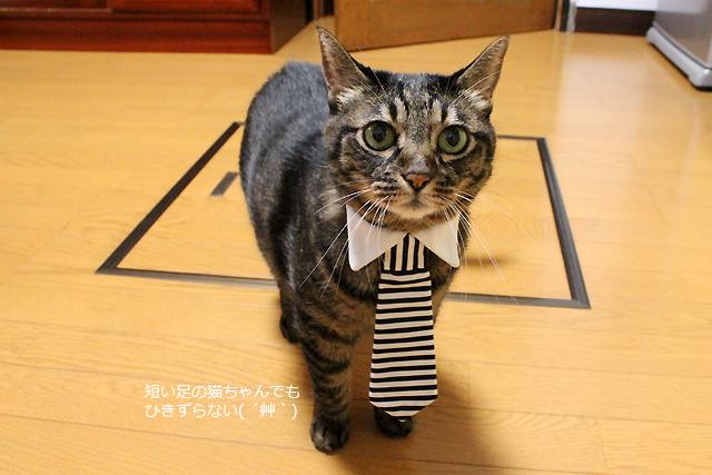 ちゃあさんにもネクタイ