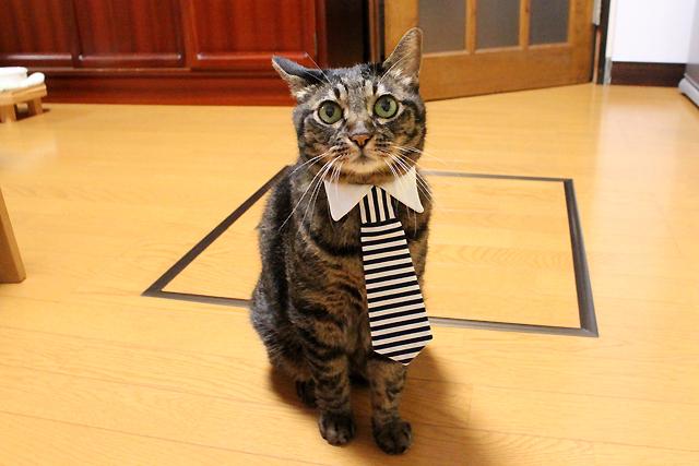 猫のネクタイ