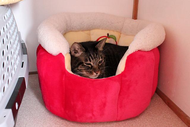 りんごちゃんベッド