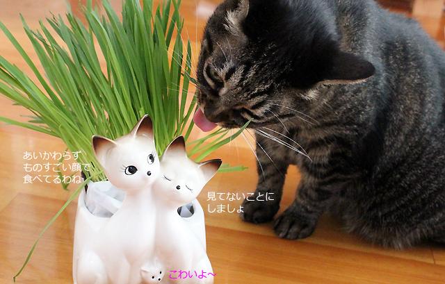 猫草ちゃあさん