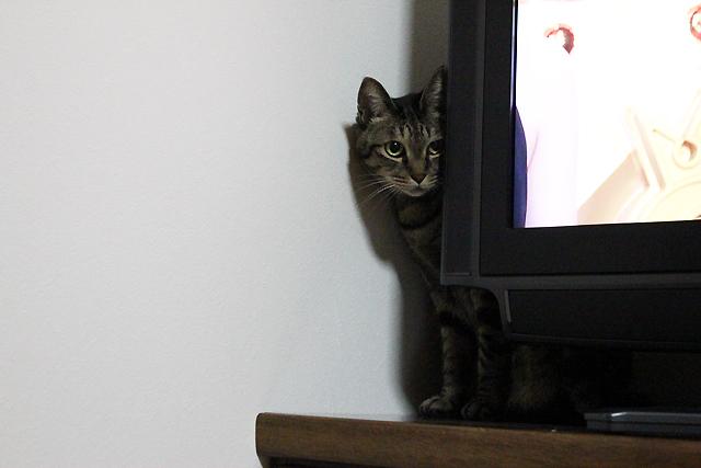 テレビの裏に隠れます