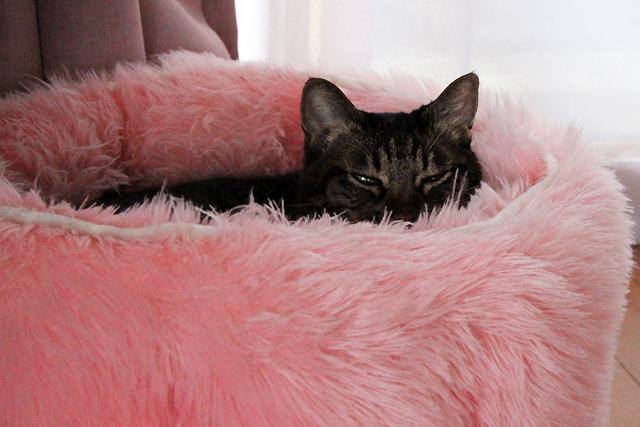 ピンクのふわふわベッドLOVE