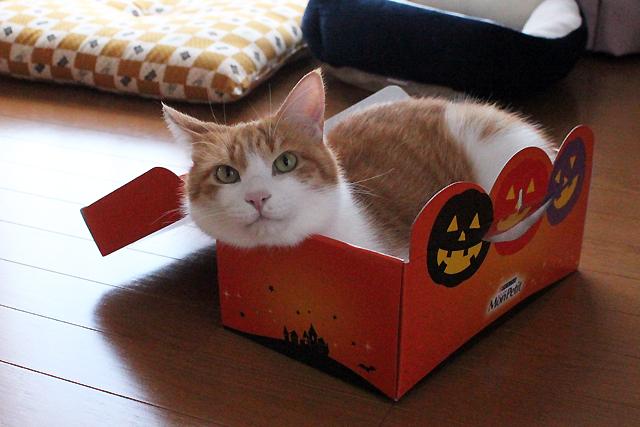ハロウィン箱