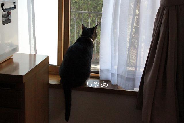 ちゃあさん1Fの窓から外観察