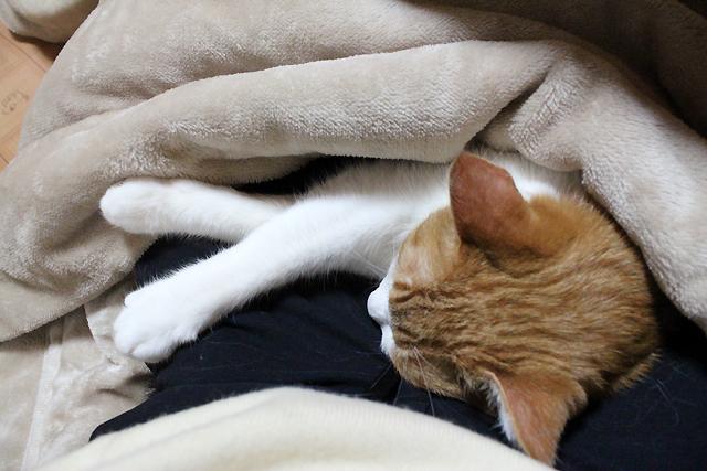 人も猫も暖かい~