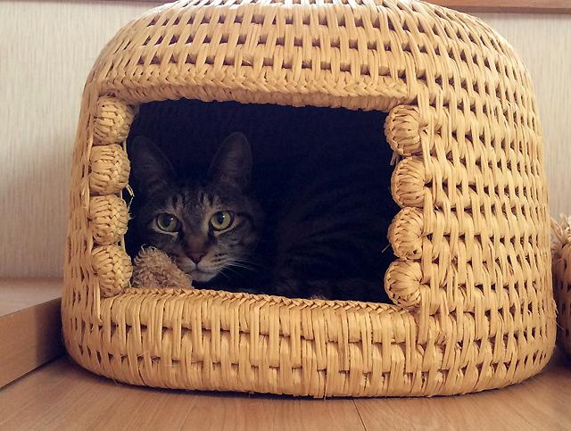 猫つぐら(猫ちぐら)に入る猫おめぐさん
