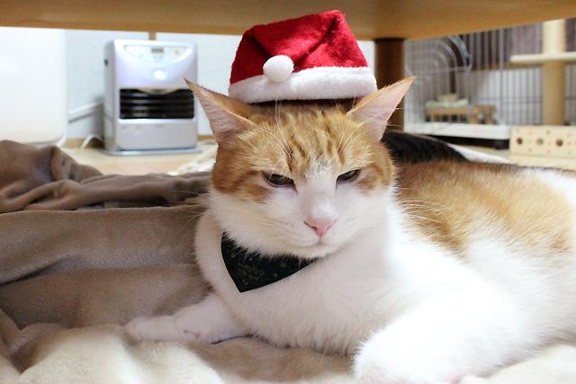 クリスマス帽子ボロボロ