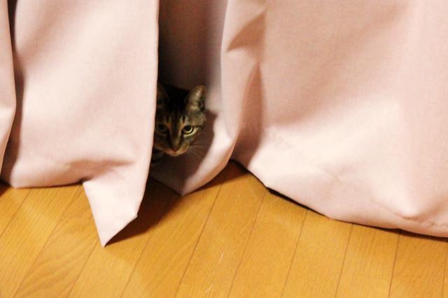 カーテンのかげ