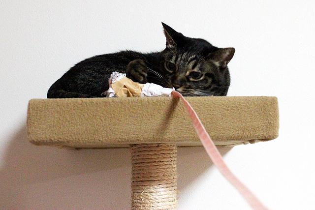 紙くずボール付き長い猫じゃらし