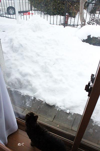雪かきがんばりました!