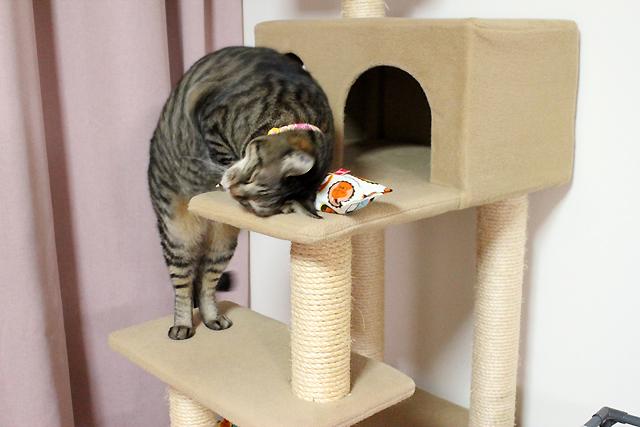 またたび入り猫のキッカー