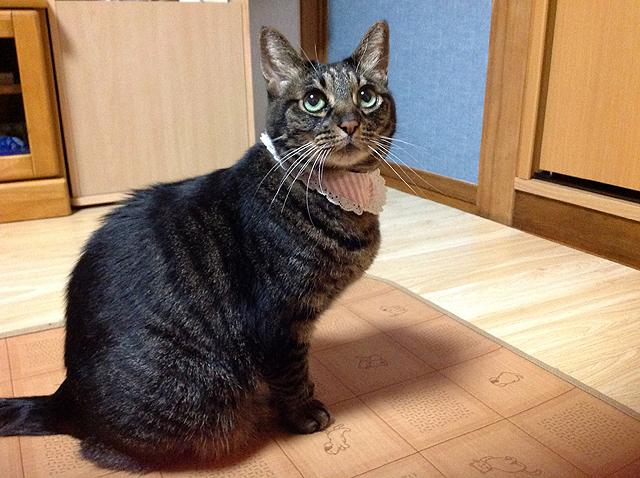 かわいい猫ちゃあさん