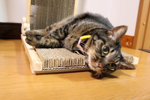 猫の手作り爪とぎ4
