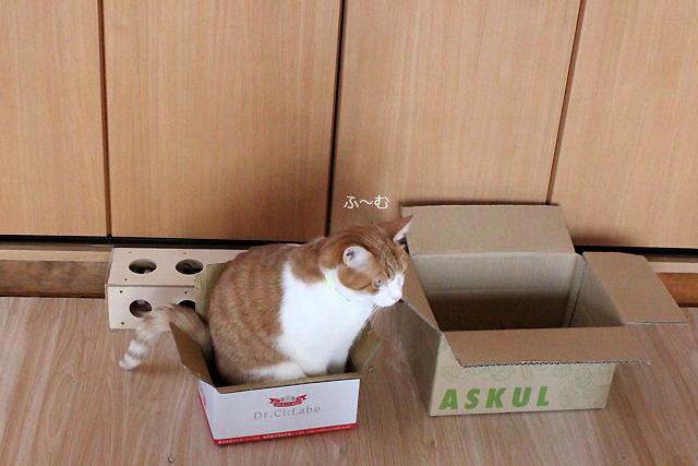 小さい箱LOVE