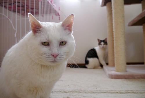 ネコと動物愛護チャリティーカレンダー2019、1月