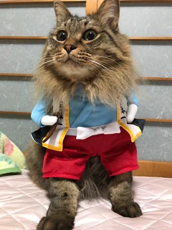 ネコと動物愛護チャリティーカレンダー2019、10月の2