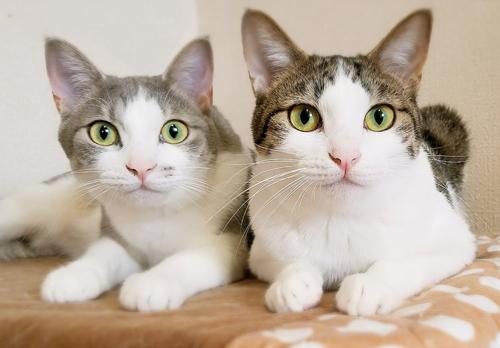ネコと動物愛護チャリティーカレンダー2019、11月の2