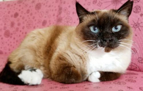ネコと動物愛護チャリティーカレンダー2019、11月の3