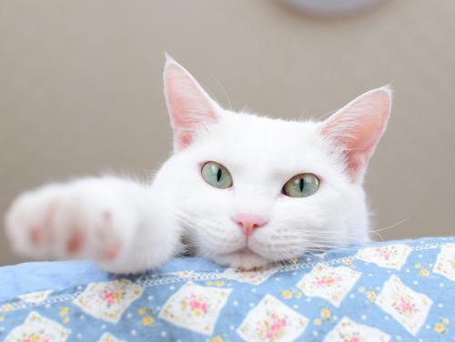 ネコと動物愛護チャリティーカレンダー2019、6月の2