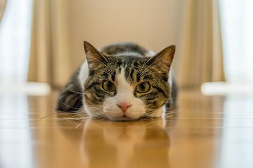 ネコと動物愛護チャリティーカレンダー2019、8月