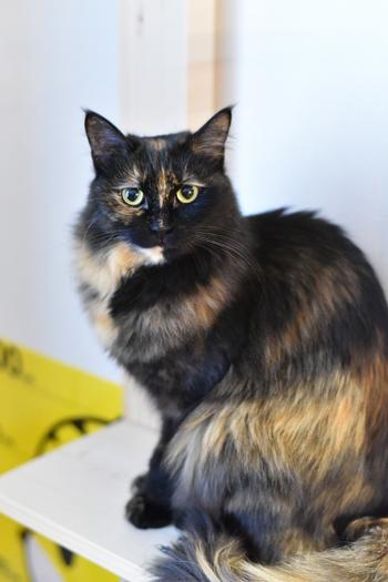 ネコと動物愛護チャリティーカレンダー2019、9月の2
